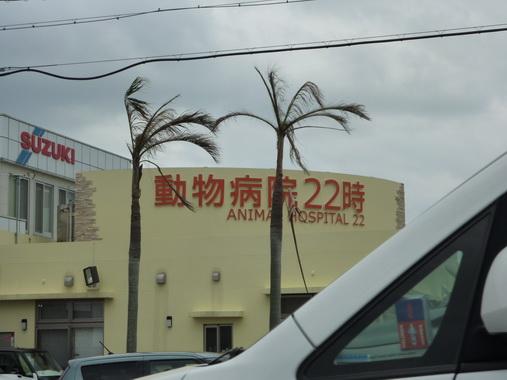 blog5_26.JPG